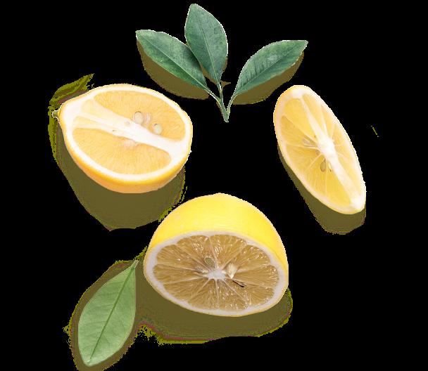 Sliced lemon and citrus leaves.